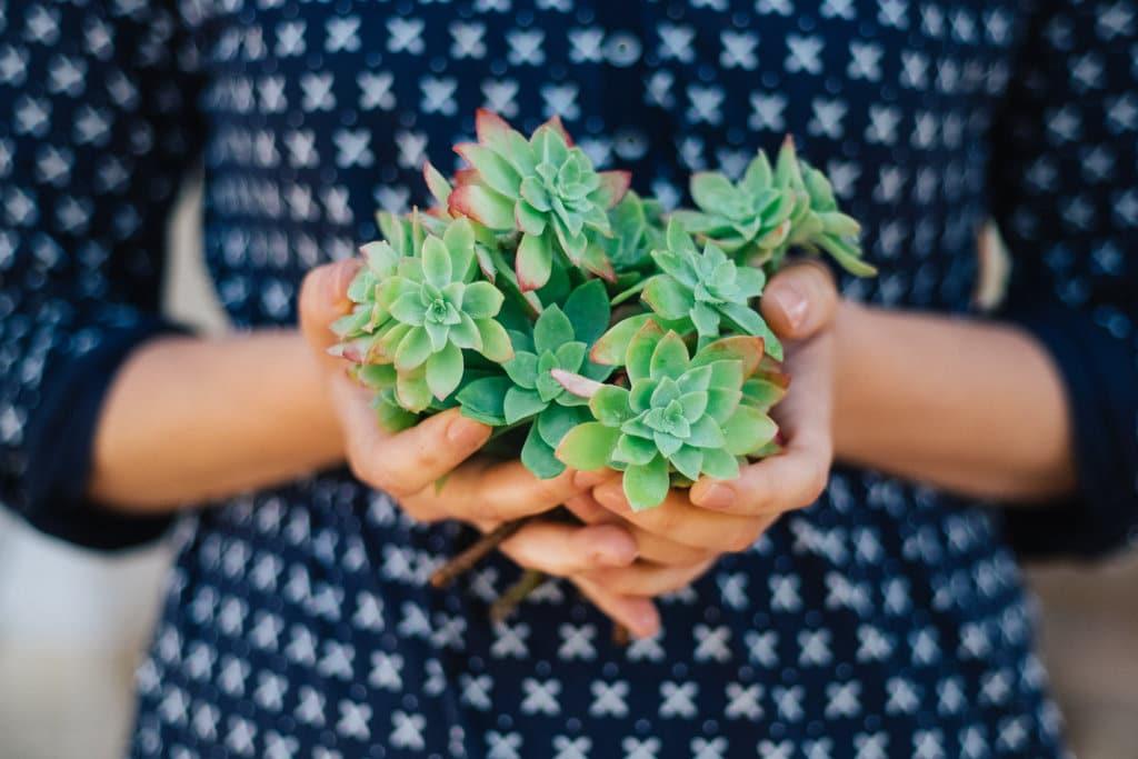Plantes dépolluantes : des végétaux au service de votre santé