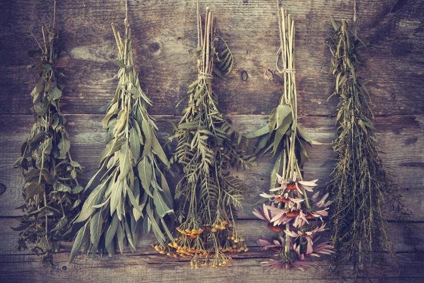Combos gagnants : les 10 plantes qui vont vous booster