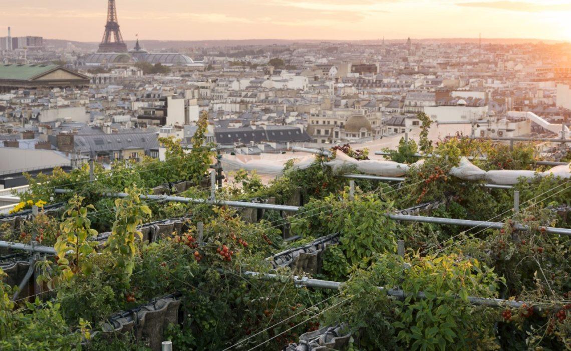 Sous les Fraises, les fermes urbaines quirendent nos villes plus vertueuses