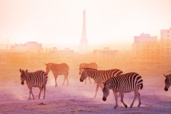 urban wildlife