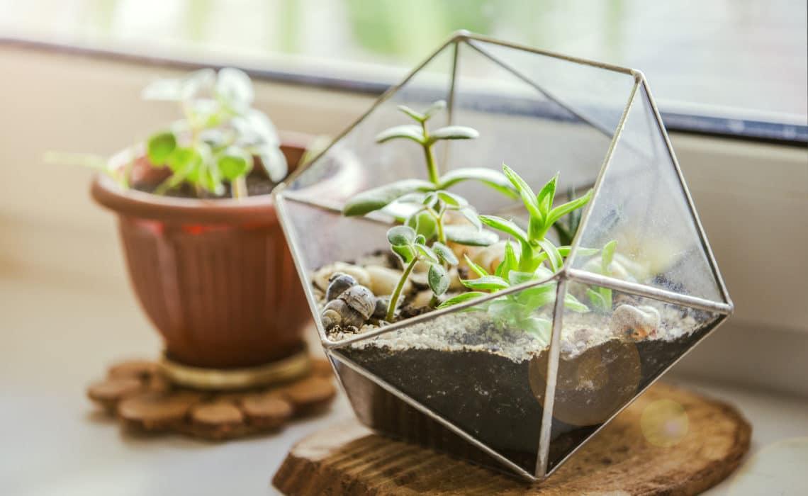 DIY: je fabrique mon propre terrarium !