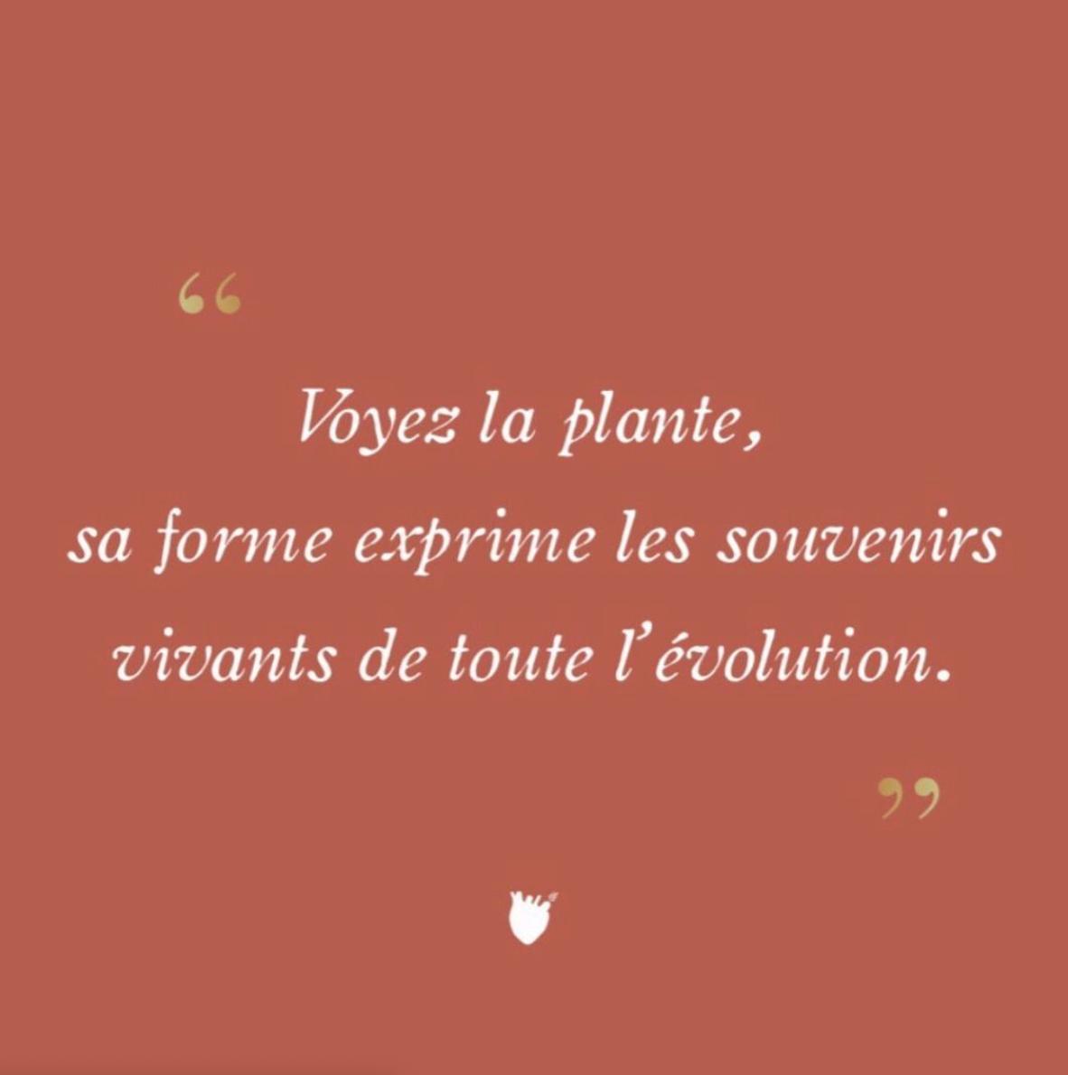 coeurveille_cosmetics